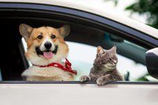 ¿Cómo viajar con animales de compañía de forma segura?